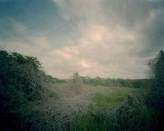 diana-bloomfield-winter-kudzu2.jpg 900×720 pixels #photograph #kudzu