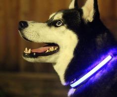 HALO MINI - Illuminated Pet Collars