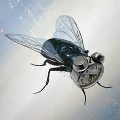 this isn't happiness™ (Blasphemous Nature, Robert Bowen), Peteski #wings #momentum #insect #illustration #fly #art #clock #surreal #awesome