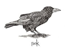 Smallwoods-Studios Illustration #rook #bird #illustration #pen #drawing