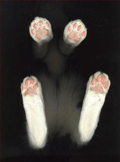 FFFFOUND! #photography #kitties