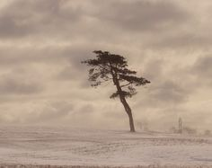 By the Sea... : Photo #cloud #tree #snow #landscape #photography #sea #nature #alone #coast #beauty