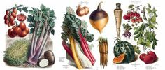 It's Nice That : 19th Century French vegetable catalogue paintings reproduced in all their painstaking glory #illustartion