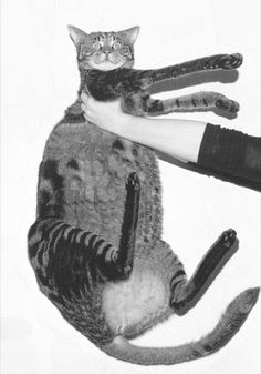 Lola Dupre « PICDIT #collage #cat #art