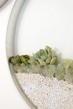 succulent, plant, interior