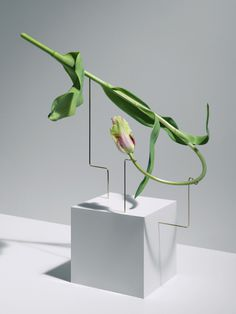 Carl Kleiner | PICDIT #photo #photography #flower