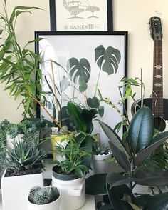 #plants #interior by @bec featuring #monsteradeliciosa print by Haarkon UK