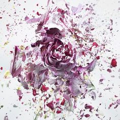 High Speed Flower Explosions by Martin Klimas | PICDIT #photos #explosion #photo #art #flower