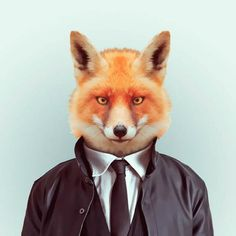 Zoo Portraits Wall to Watch #fox #jacket #photo #zoo #photography #portrait #manipulation #animal