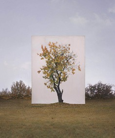 Framed Trees in South Korea by Myoung Ho Lee