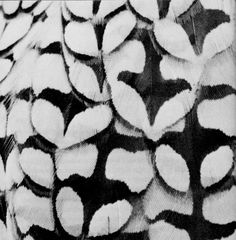 The Joyous Cosmology by Alan Watts #watts #white #black #feathers #nature #alan