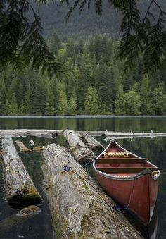 Pinned by #water #tree #photo #reflect #mirror #photography #boat #forest