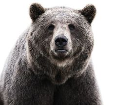 design work life » Morten Koldby Animal Portraits #bear