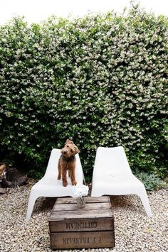 Abigail Ahern at Home in London #dog