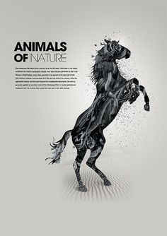 Animals of nature on the Behance Network #horse #minimal #poster #animal #typography