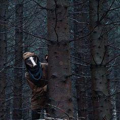 'Auf der Flucht' ein Foto von 'Flügelfrei' #darkness #badger #autumn #forest #animal #trees