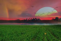 #sunset#Nature#outdoors#birds#green#grass