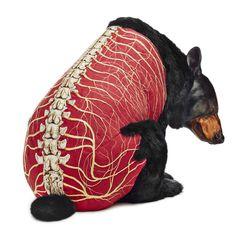 DEBORAH SIMON #of #anatomy #the #embroiders #bears #furless