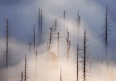 Beautiful Cloud Forest and Fog Photography by Kilian Schönberger