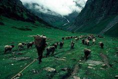 Himalayas #photography