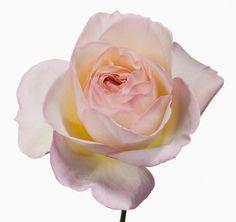 Big Blooms by Paul Lange