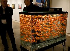 Art Here Lately - winter 2010- spring 2011 #goldfish #casting #aquarium #altman #helen