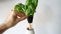 Grow Green : Self Watering Plant