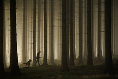 Sebastian Łuczywo #photo #forest #walk