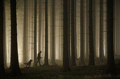 Sebastian Łuczywo #photo #forest #walk