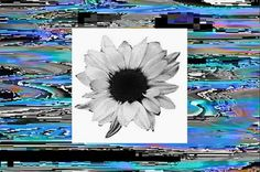 All sizes | flower | Flickr - Photo Sharing! #jpg #collage #glitch #weird