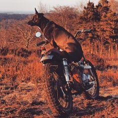 #klassikkustoms #Flowstyle #FlowTracker dog moto