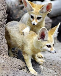 Screen-shot-2011-03-25-at-6.53.47-AM.png (648×808) #fox #desert