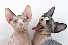 MOONMUD #fun #cats