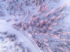 Winter Forest of Finish Lapland From Above by Tiina Törmänen
