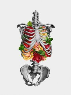 DeadFix » K1 #illustration #skeleton #flowers #ribcage