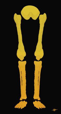 Bones / Print Illustration