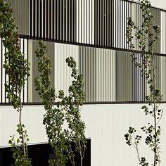 Dezeen » Blog Archive » Castellbisbal School by MMDM Arquitectes #architecture