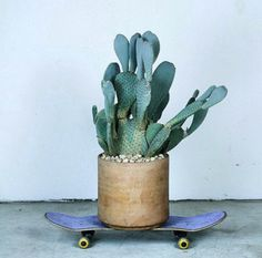 Free as a Bee #skateboard #cactus