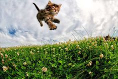 Adorable Cats And Kittens Flying Through The Air by Seth Casteel