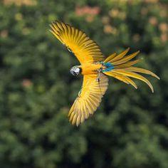 Amazing Bird Photography by Johnson Chua