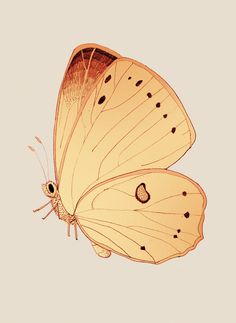 Butterfly days mariadiamantes #butterflies #illustration #design