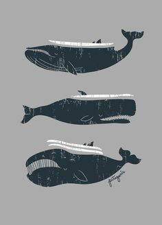 #illustration #whale