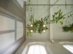 bucketlight by roderick vos brings the rainforest into the home #power