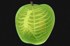 You Are What You Eat (Apple) #skeleton #apple #ribs #fruit #anatomy #organs #ray #lungs #bones