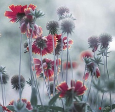 Beautiful and delicate flowers by Cherrys Picks