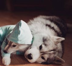 Adorable Huskies Photo with Human Clothes by Erica Tcogoeva #dogs #animals #photography #inspirations