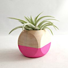 Geometric Air Plant Cube Planter With Tillandsia Hondurensis // Neon Pink Natural Wood Colorblock #industrial design #wood #pink #plant #pla