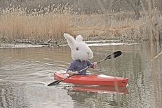 Brock Davis - BOOOOOOOM! - CREATE * INSPIRE * COMMUNITY * ART * DESIGN * MUSIC * FILM * PHOTO * PROJECTS #canoe #rabbit #photography