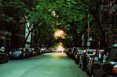 nyc  #city #street #dusk #cars #newyork #nyc #trees #manhattan #photography
