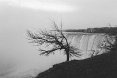 Niagara #photo #waterfall #tree